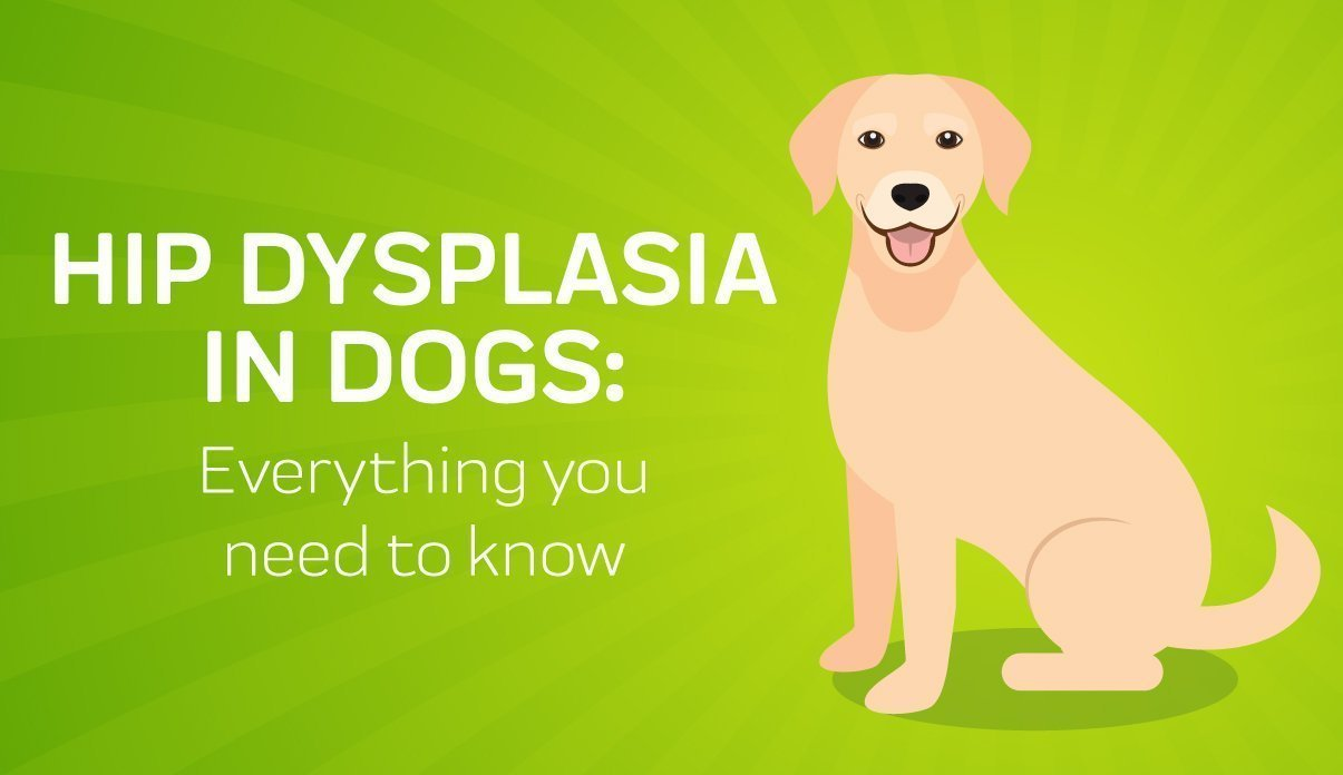 EARLY DETECTION AND TREATMENT OF HIP DYSPLASIA IN PUPPIES