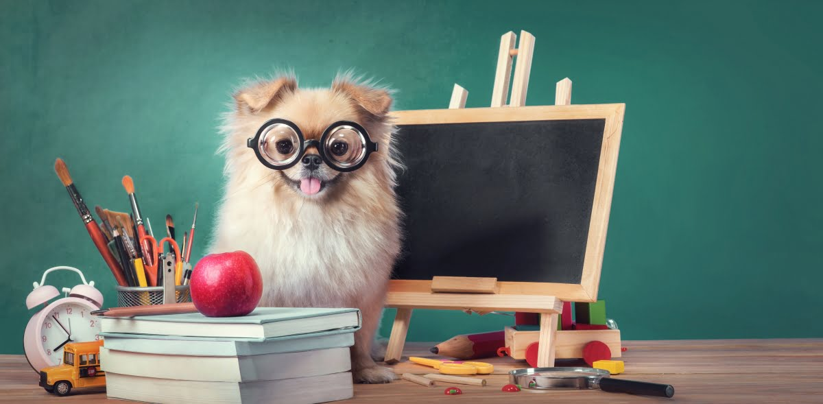 Too Cool for School: Back-To-School Tips for Pets
