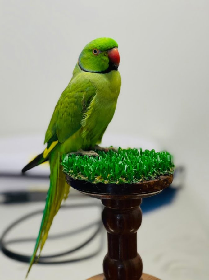 In the Life of a Parakeet
